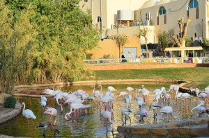 riyadh-national-zoo-saudi-arabia.jpg